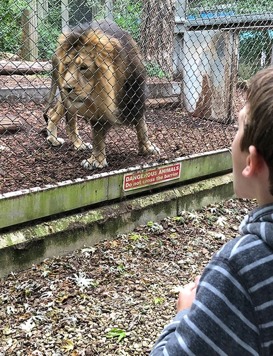 bristol-zoo_208269