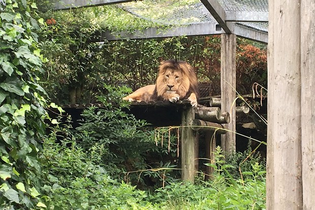 bristol-zoo_208284