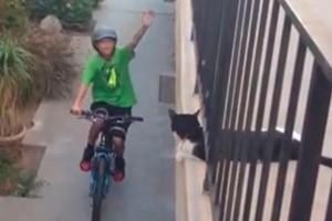 cat-high-fives-boy-on-a-bike-video_55730