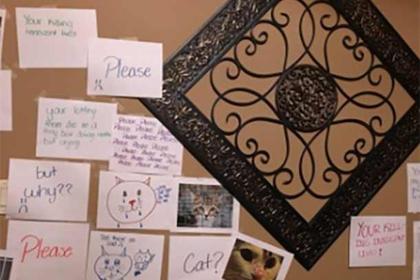cat-wall-of-shame_189178
