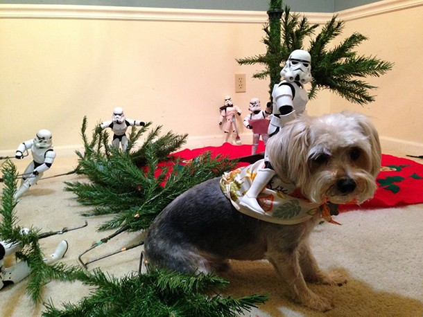check-out-these-stormtroopers-putting-up-a-christmas-tree_138720