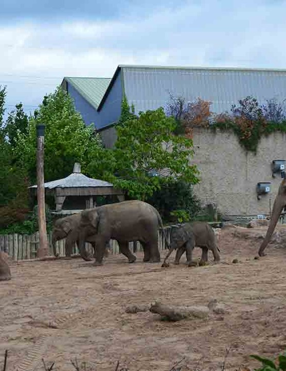 chester-zoo-chester_212455