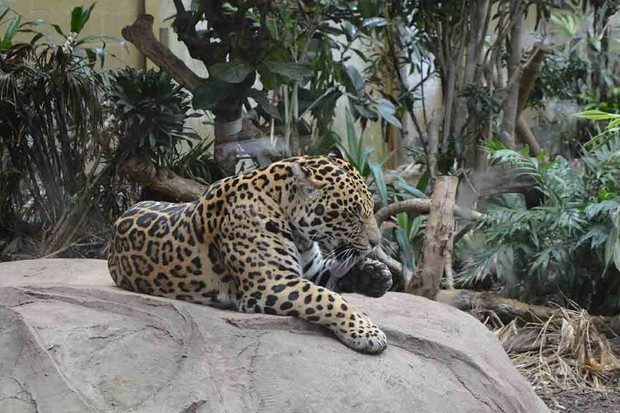 chester-zoo-chester_212469