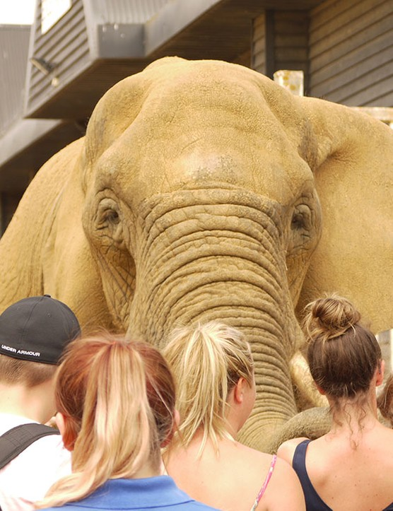 colchester-zoo_205723