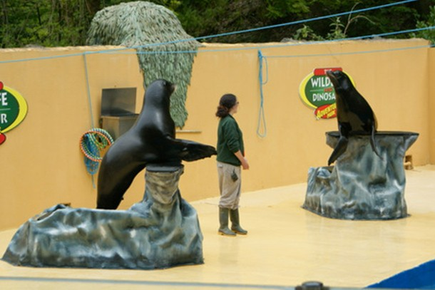 combe-martin-wildlife-and-dinosaur-park-review-for-families_59477