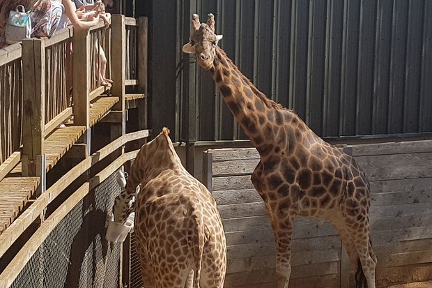 cotswold-wildlife-park-and-gardens_208292