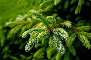 could-your-child-have-christmas-tree-syndrome_139244