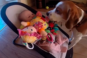 dog-apologises-to-baby-for-stealing-her-toy-video_58474