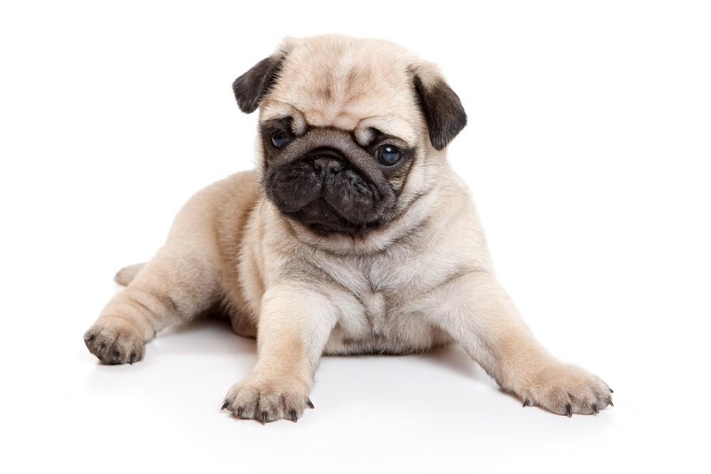 dog-that-helped-little-boy-talk-is-stolen_12388