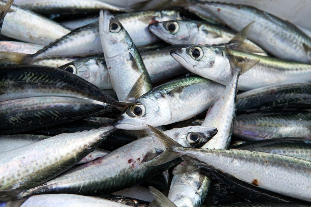 eating-the-right-fish-before-and-during-pregnancy-may-protect-against-adhd_73208