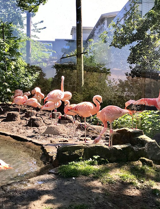 edinburgh-zoo_205657