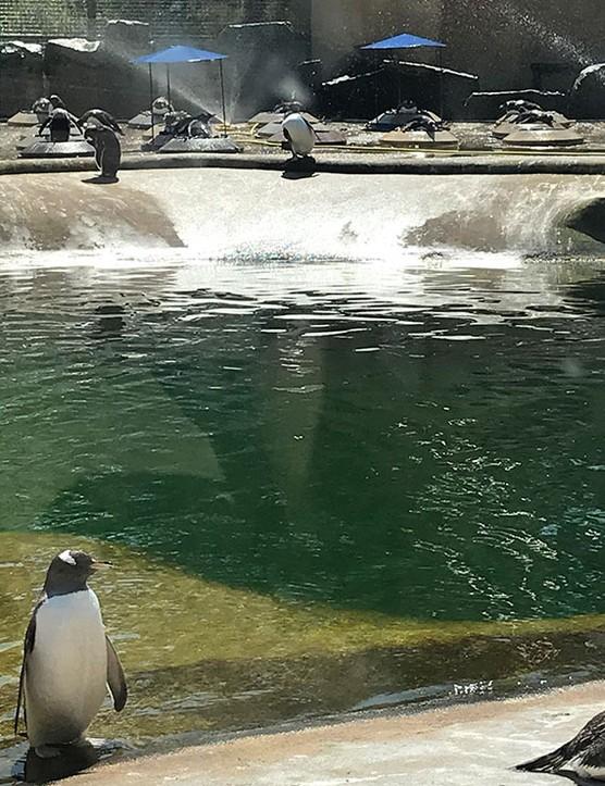 edinburgh-zoo_205672
