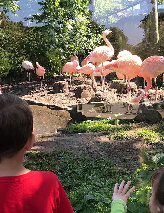 edinburgh-zoo_205673