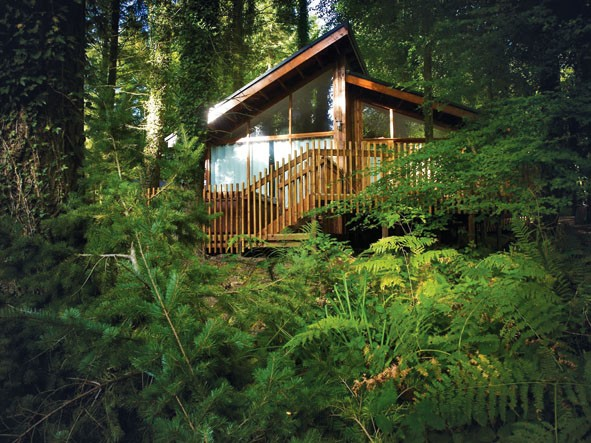 family-holiday-review-a-log-cabin-in-the-middle-of-the-forest-of-dean_20491