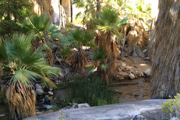 family-holiday-review-palm-springs-california_81192
