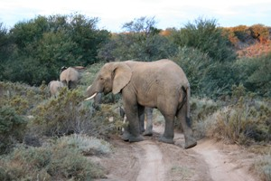 family-holiday-review-sanbona-wildlife-reserve-south-africa_56721