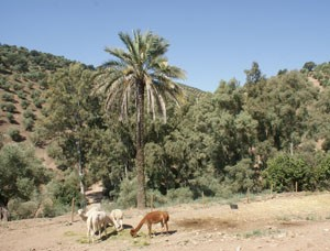 family-holiday-review-self-catering-apartment-in-alpacas-del-sol-near-cordoba_42685
