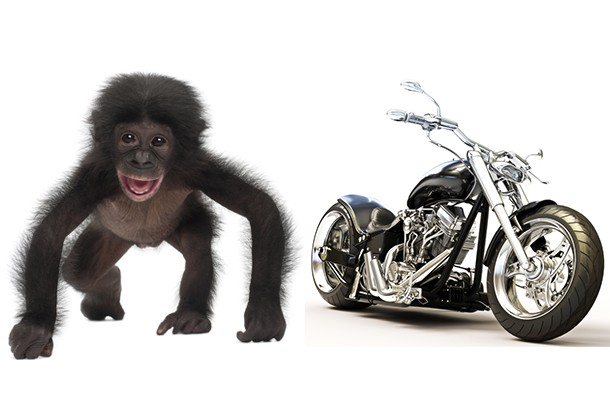 from-monkeys-to-motorbikes-to-combine-harvesters-what-mfm-kids-ask-santa-for-christmas_81686
