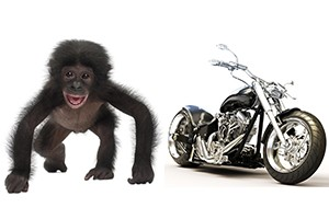 from-monkeys-to-motorbikes-to-combine-harvesters-what-mfm-kids-ask-santa-for-christmas_81687