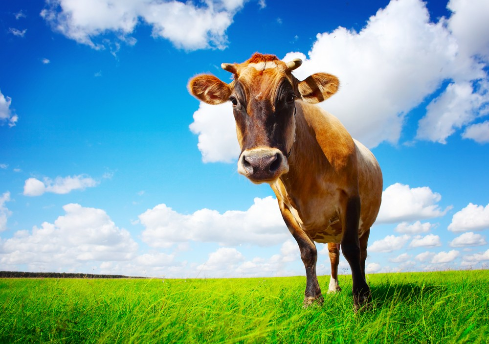 gm-cows-to-produce-human-breast-milk_20376