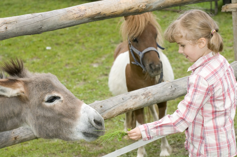 how-to-keep-your-child-safe-at-a-farm_12990
