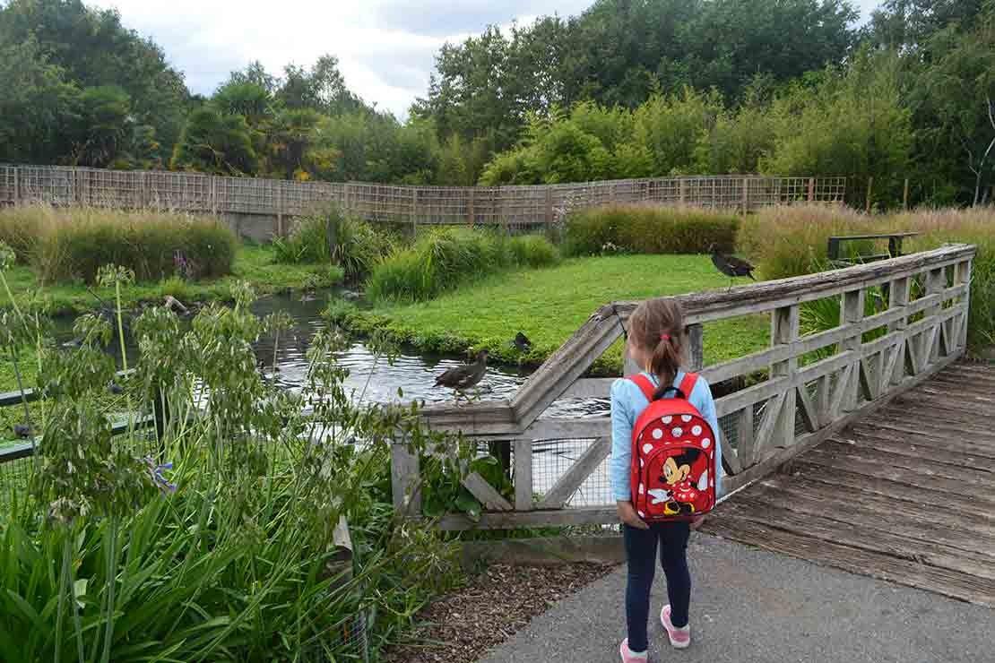 london-wetlands-centre-barnes_c