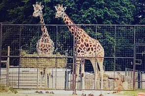 longleat-safari-and-adventure-park_208399