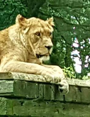 longleat-safari-and-adventure-park_208400