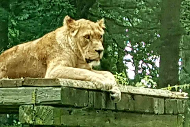 longleat-safari-and-adventure-park_208400