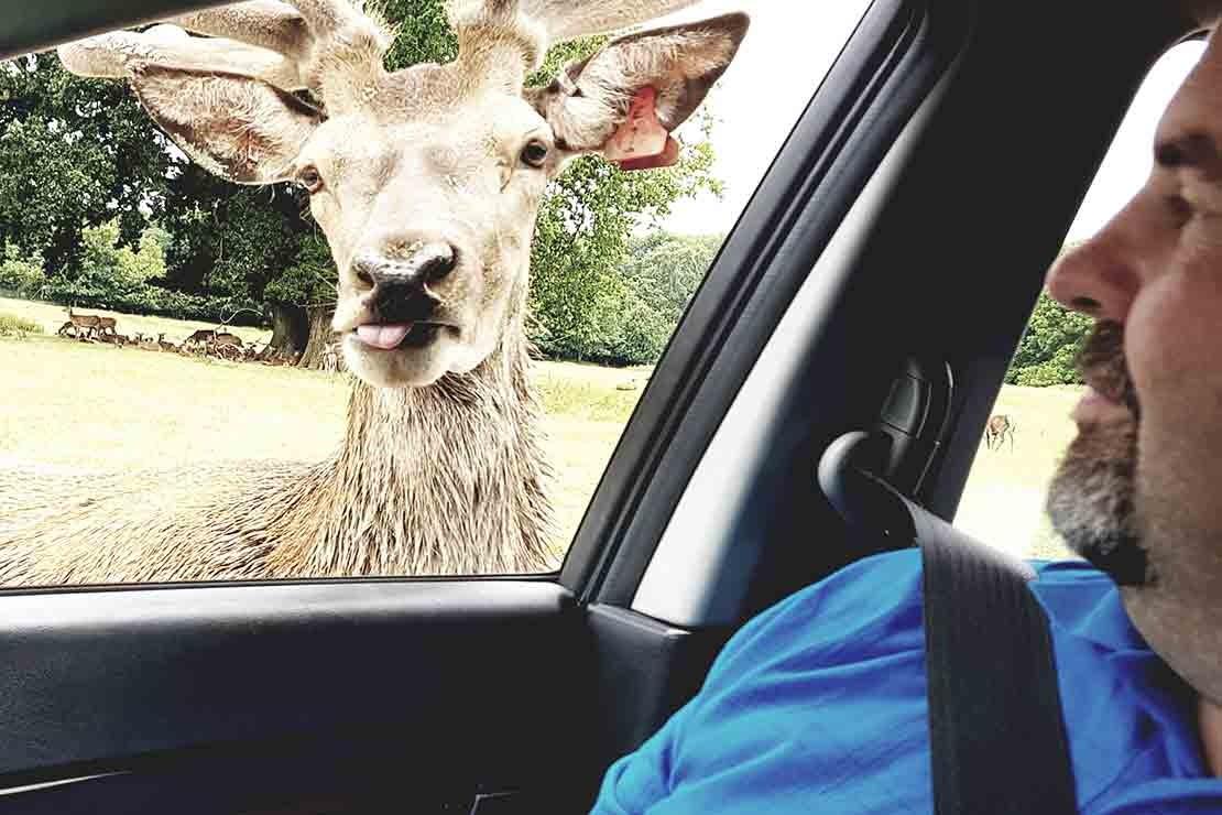 longleat-safari-and-adventure-park_b