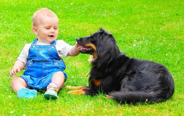 mans-best-friend-is-babys-best-friend-too_39475