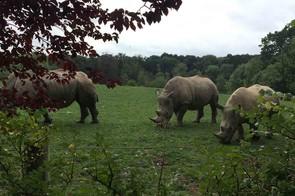 marwell-zoo-hampshire_210337