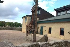 marwell-zoo,-hampshire_210339