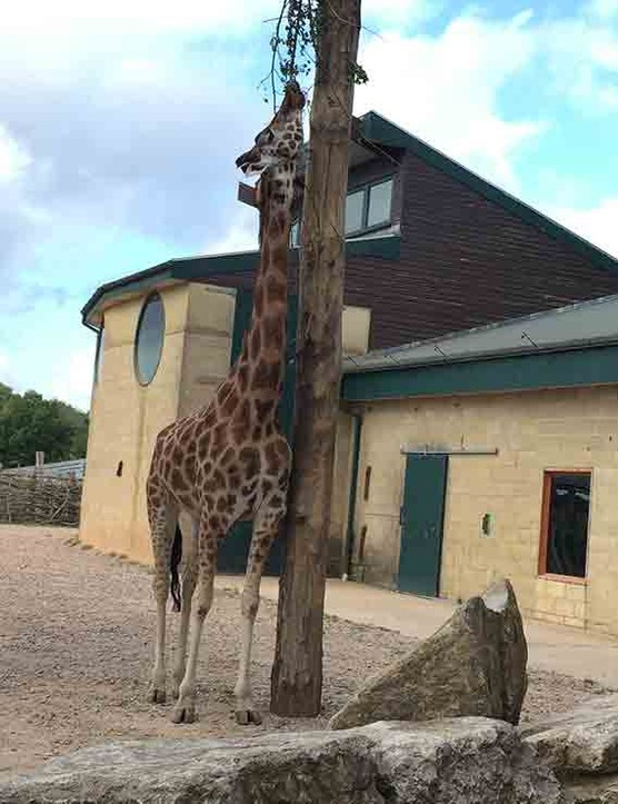 marwell-zoo,-hampshire_210339