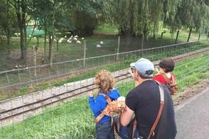 marwell-zoo,-hampshire_210342