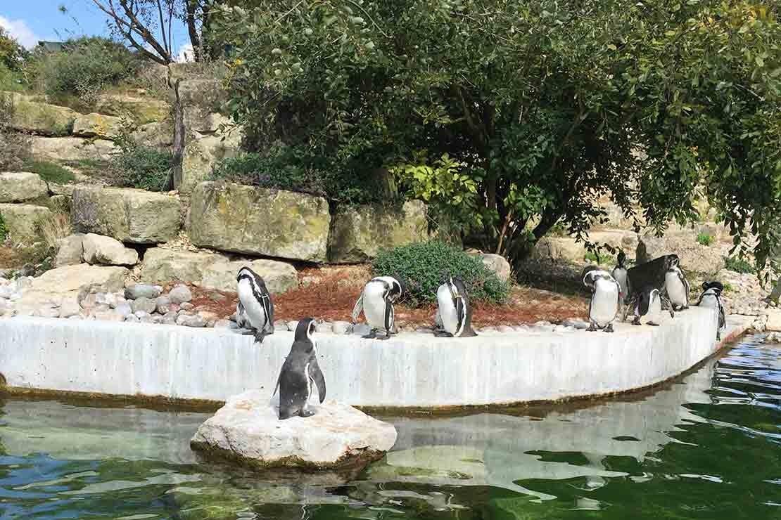 marwell-zoo-hampshire_210344