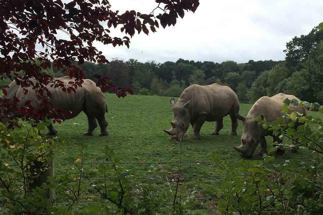 marwell-zoo-hampshire_a