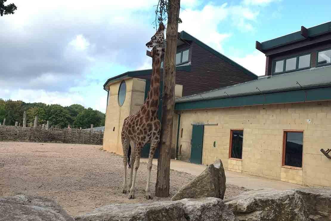 marwell-zoo-hampshire_d