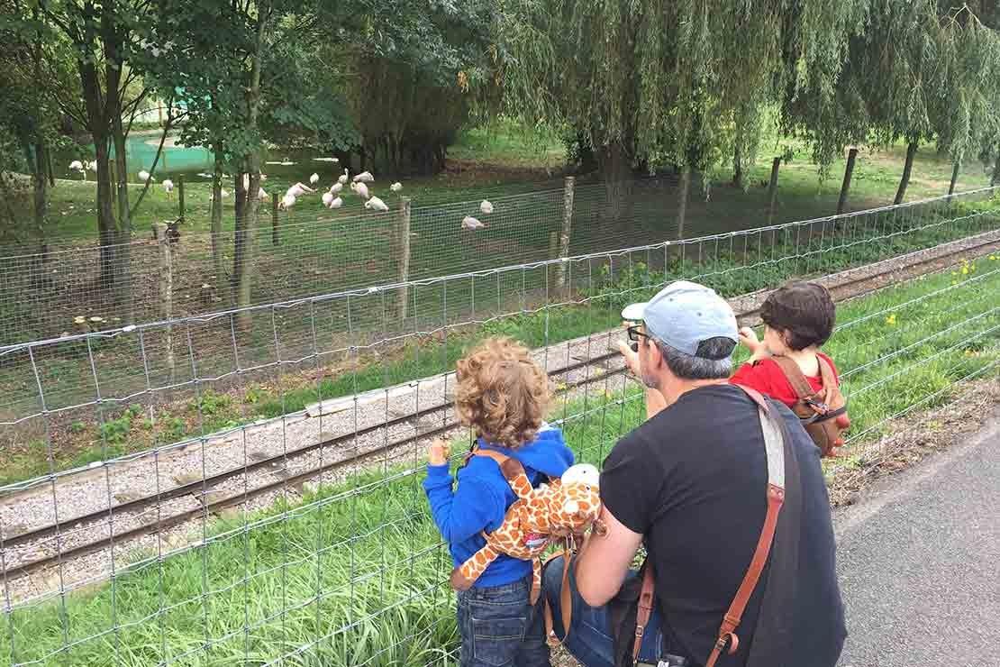 marwell-zoo-hampshire_e