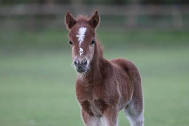miniature-pony-centre-review-for-families_59188
