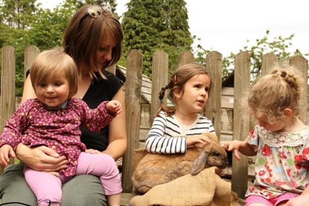 miniature-pony-centre-review-for-families_59190