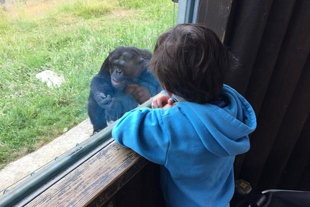 monkey-world_208335