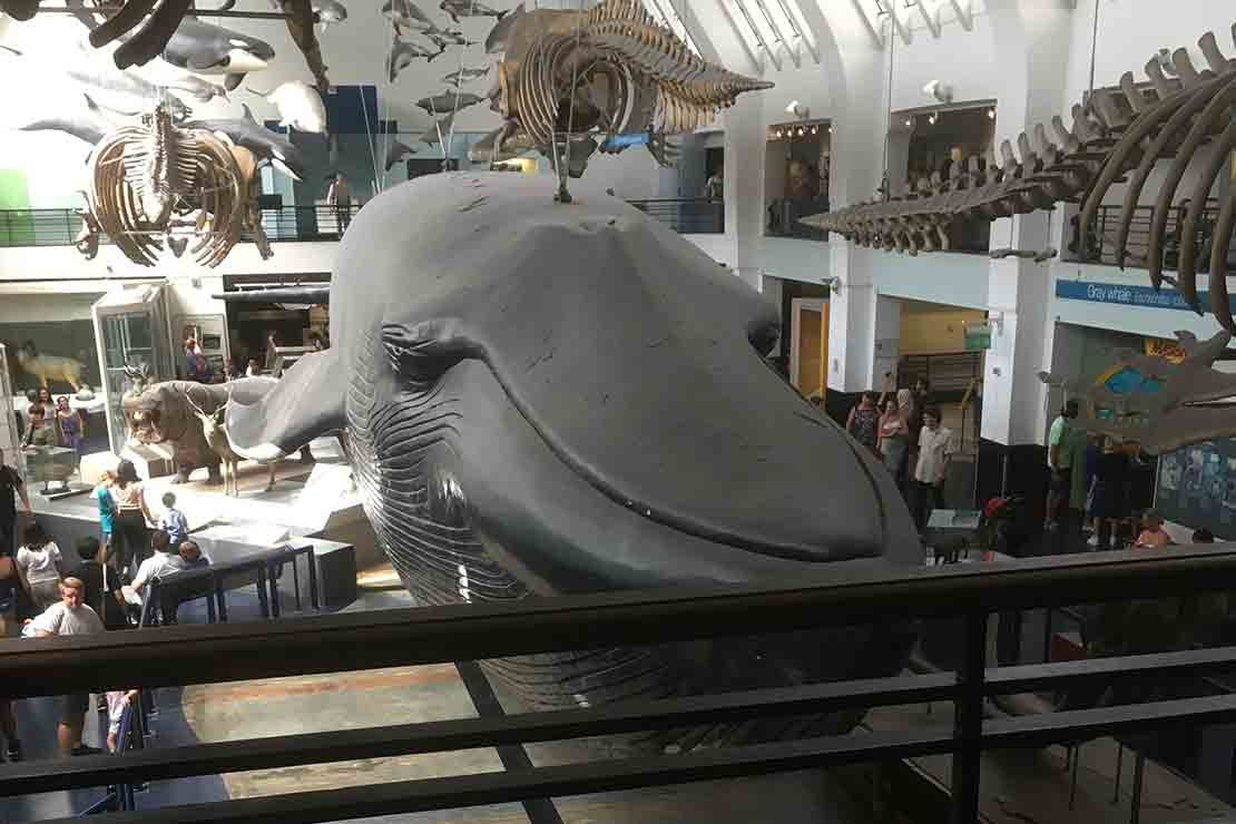 natural-history-museum_i