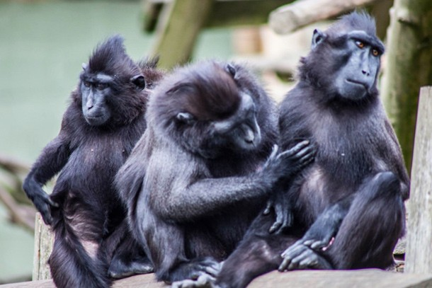 newquay-zoo-review-for-families_60039