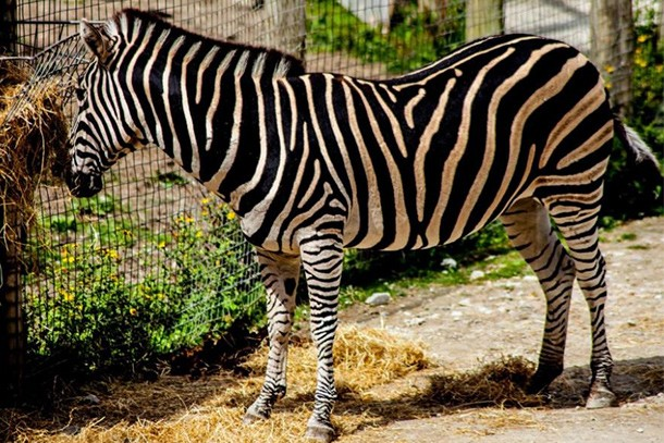 newquay-zoo-review-for-families_60041