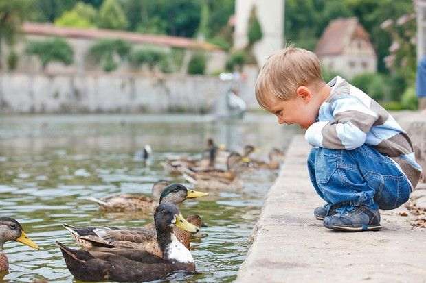 no-bread-please-were-ducks_85654