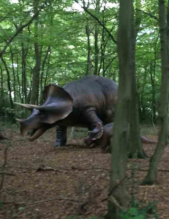 paradise-wildlife-park,-hertfordshire_212290