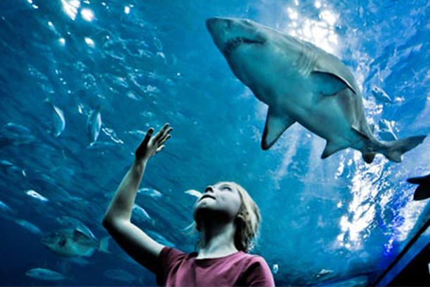 plymouth-aquarium-review-for-families_58795