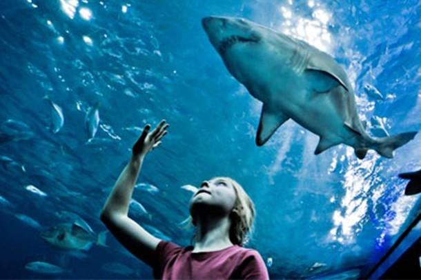 Image result for national marine aquarium