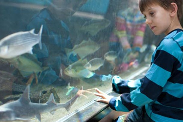 plymouth-aquarium-review-for-families_58796